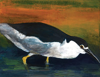 Black Crowned Night Heron, 14 by 18 inches, acrylic on canvas SOLD