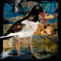 Oyster Catcher, 20 x 20 inches, acrylic/goldleaf/sand paper/canvas SOLD