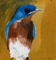 Little Eastern Bluebird, 11 x 12 inches, acrylic/panel SOLD