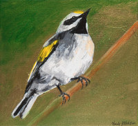 Gold Winged Warbler, 11 x 12 inches,acrylic/canvas SOLD