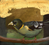 Evening Grosbeak, 11 x 12 inches acrylic/goldleaf/canvas SOLD